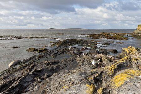 coastline: Coastline Falkland Islands