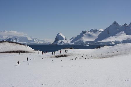 Antarctica, Cuverville Island