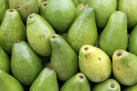green papaya: Green Papaya Stock Photo