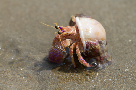 inhabit: Hermit crab crawling