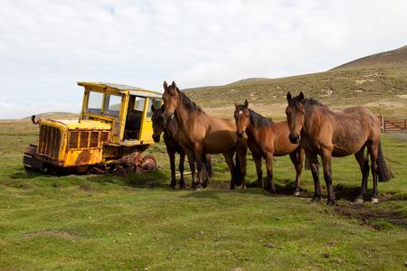 dredger: Old dredger and horses