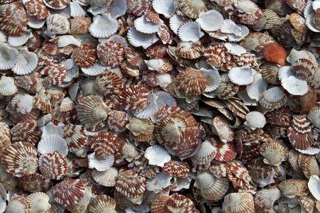 mussels: Plenty of Mussels