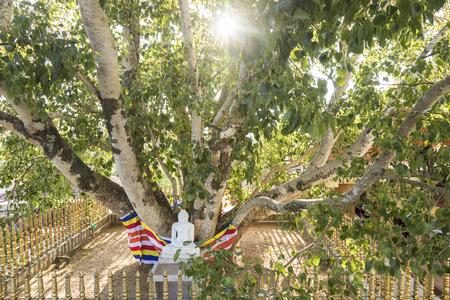 gods: Buddha statue under a holy bodhi tree in Kandy, Sri Lanka Stock Photo