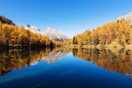 アルブラの近くに湖は秋、Grisons カントン, スイス連邦共和国の黄金の木が渡す Palpuogna のビューを見事な