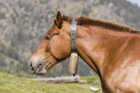 Close-up of a horse wearing a bell around his neck in the Pyrenees of Andorra