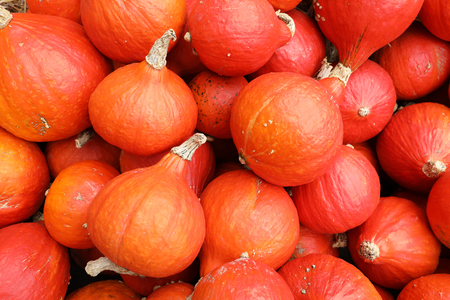 A collection of red pumpkins on an autumn market in Switzerland Stock Photo