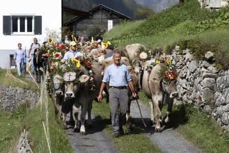 Wassen, Switzerland, September 15 2018: Ceremonial driving down of cattle from the mountain pastures Susten into the valley of Wassen in Canton Uri in autumn