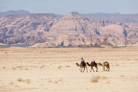 Al Ula, Saudi Arabia, February 20 2020: Bedouin rides his camels through the desert near Al Ula, Saudi Arabia