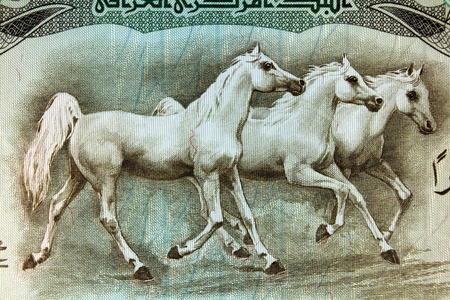 explanatory: IRAQ - Approximately 1980: Horses running on Iraqui 25 Dinars 1980 Banknote from Iraq Editorial