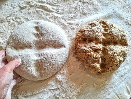 Bread forms kneaded ready for the oven