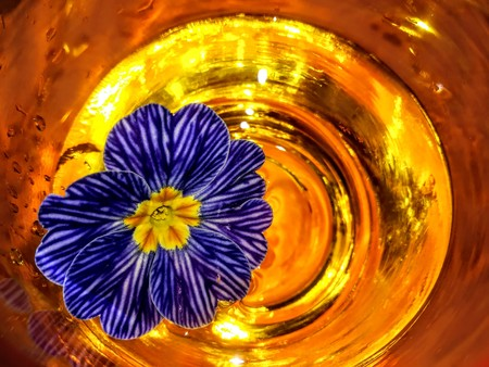 Flowers and glass, abstract photographic image and fantasy Archivio Fotografico