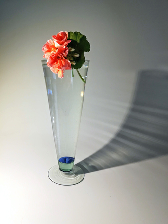 Flowers in glass, still life with shadow Archivio Fotografico - 101841255