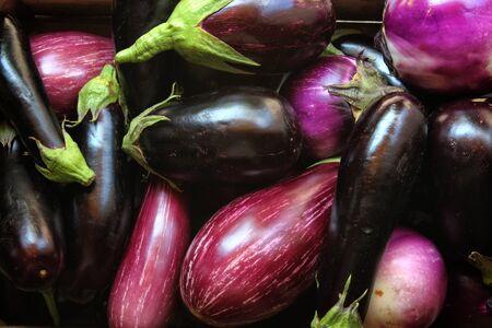 Eggplants ready for sale in the store, organic farming Archivio Fotografico - 129342855