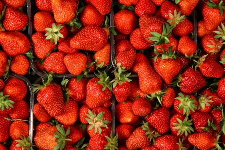 Red summer strawberries, fresh fruit ready in boxes for sale