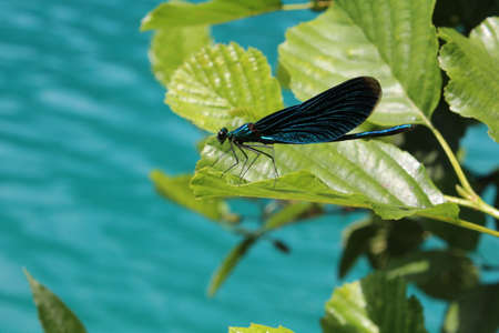 Dragonfly standing on green leaf in natural environment Archivio Fotografico