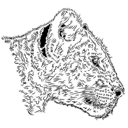 Lion cub head, vector illustration on the white background Vettoriali