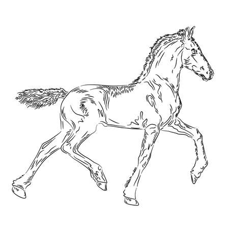 Horse foal design on the white background, vector illustration