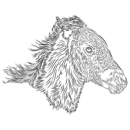 Horse foal head design on the white background, vector illustration Archivio Fotografico - 169852679
