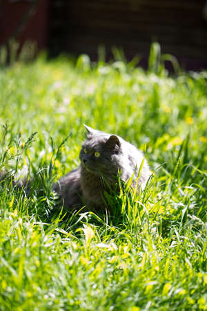 The cat on a grass photo