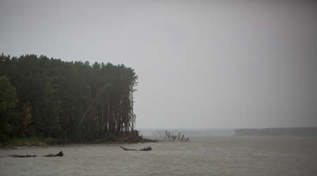 Trees on shore of the sea in Siberia, Russia photo