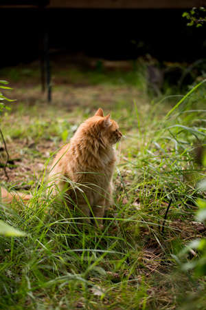 Beautiful red cat on the grass photo