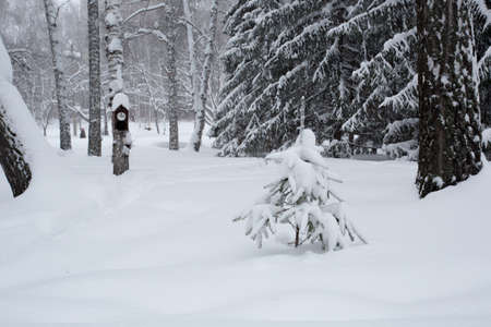 Birdhouse in the winter forest photo for you photo