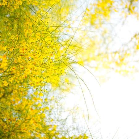 デザインの写真の花のポストカード 写真素材