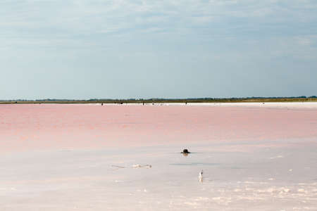 salty: Salty pink lake photo for you