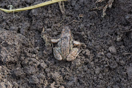 sitting on the ground: Little frog sitting on the ground photo for you Stock Photo