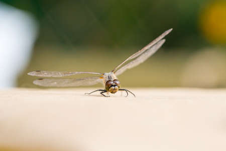 Beautiful dragonfly with transparent wings photo for you