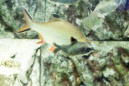 fish tank: Beautiful colorful fish in the aquarium