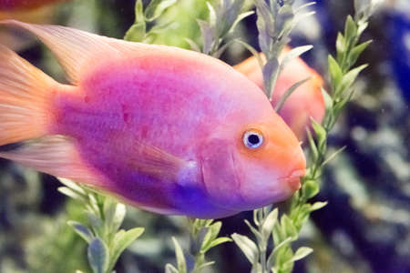 Beautiful colorful fish in the aquarium photo for you Stock Photo