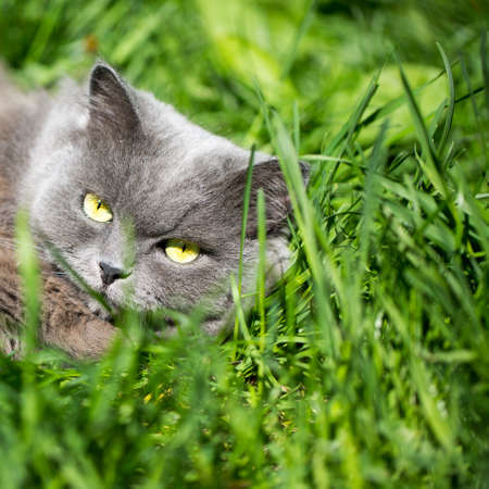 The cat on a grass Stock Photo