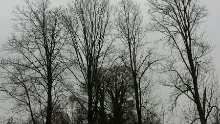 withe: Trees