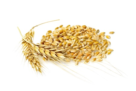 grain: Wheat grains and cereals spike, isolated on white background. Wheat ears - close up image. Stock Photo