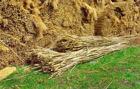 Bundles of Roof Thatching Grass  Making the thatched roof in the traditional style in Denmark  Natural material for new thatched roof of a rural house  Replacement cover for the roof - the environmental roofing material made of reeds  photo