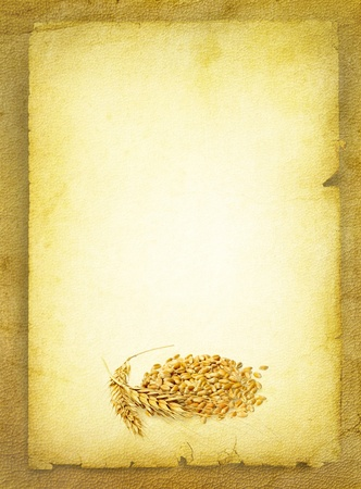 Wheat ears at the old parchment blank  Wheat grains and cereals spike on vintage paper background   photo
