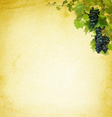 wine country: Wine composition at vintage background  Grapes on the blank paper for the wine collage  Bunches of red grapes - grapevine at the grunge texture  Stock Photo