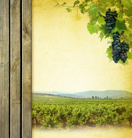 wine country: Wine composition with vineyard  Wine list background  Grape on the blank paper for the wine collage  Bunches of red grapes to grapevine and wooden grunge background