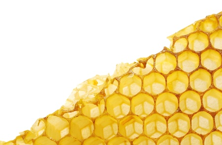 bee honeycombs corners without honey isolaned on a white background photo