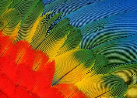 Exotic texture feathers background, closeup bird wing  Colorful parrot feather background