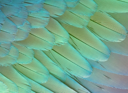 exotic texture feathers background, closeup parrot wing Stock Photo