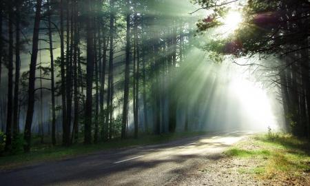 shining through: Foresta magica sotto i raggi del sole del mattino i raggi luminosi del sole sulla strada forestale inclinato luce solare attraverso gli alberi nel sole del mattino legno lucido attraverso i rami sulla strada di campagna