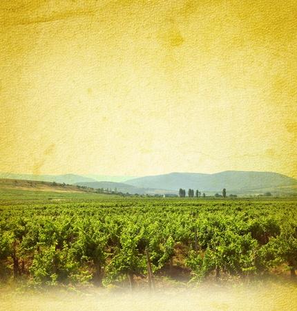 Wine concept with vineyard  Wine list background with grapevine on grunge background for your design  Standard-Bild
