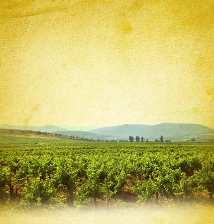 vine country: Wine concept with vineyard  Wine list background with grapevine on grunge background for your design  Stock Photo