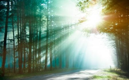 shining through: Foresta incantata nei raggi del sole del mattino i raggi luminosi del sole sulla strada forestale inclinato luce solare attraverso gli alberi nel sole del mattino legno splende attraverso i rami sulla strada di campagna