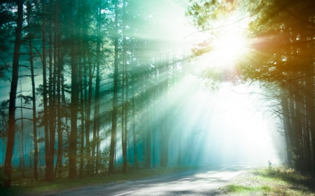 shining light: Magical forest in the morning sunlight rays  Bright rays of sunlight on the forest road  Slanting solar light through trees in the wood  Morning sun shining through the branches on the country road  Stock Photo