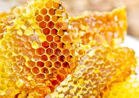 abejas panal: Honey Bee peine fondo panales de cera con miel Foto de archivo