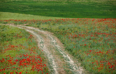 Green grass and red flowers photo