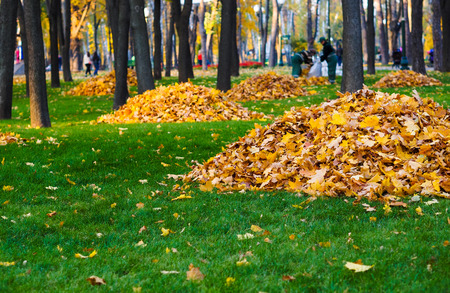 autumn leaves of the heap
